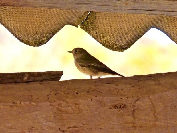 bird-1003468_640